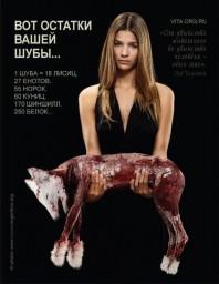 Жестокость к животным